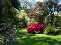 Stunning Rhododendrons at Picton Castle in Pembrokeshire