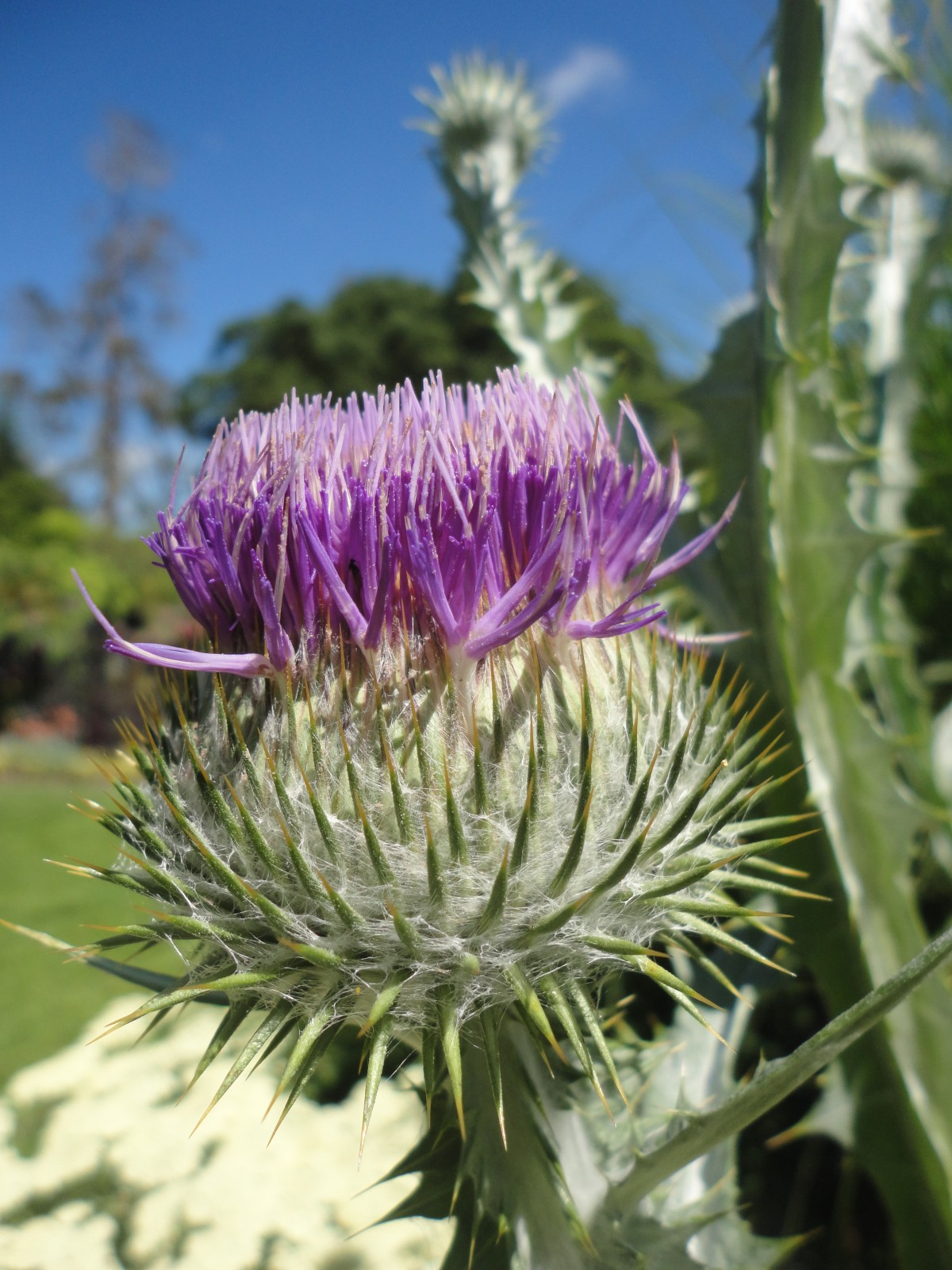August Picton Castle Amp Gardens