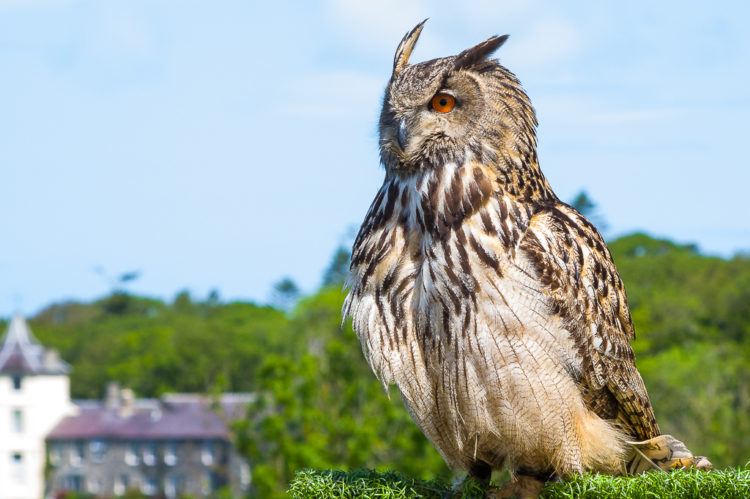 Welsh Owl Garden